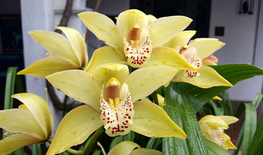 Curated: Orchids and their Care